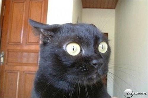 gato-preto-assustado2.jpg